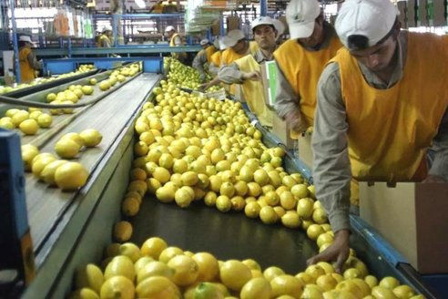 ¿Qué destinos tuvieron naranjas, y limones con mancha negra?