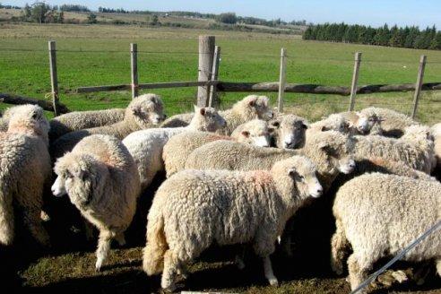 Buscan dar un nuevo impulso a la producción ovina