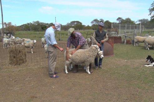 En cabaña La Florencia los ovinos mandan
