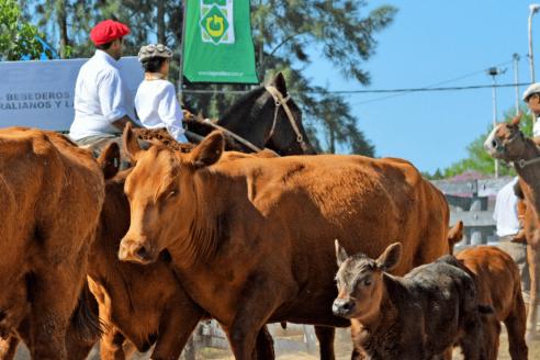 Regresa la exportación de genética bovina a la República Oriental