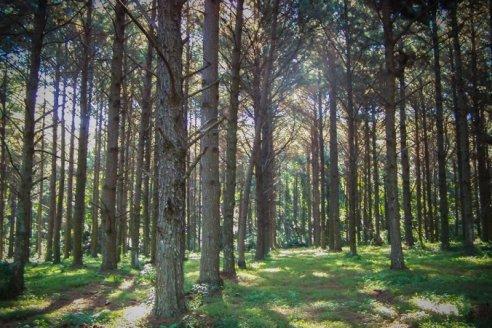 Extienden el plazo para presentación de proyectos de preservación de bosques nativos