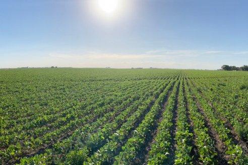 Vitagrow, el nuevo fertilizante foliar orgánico mineral de Rizobacter