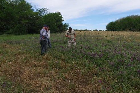 P. Guelperin - Asesor y A. Weber - Productor - Experimentación adaptativa y comparación de modelos con cultivos de cobertura