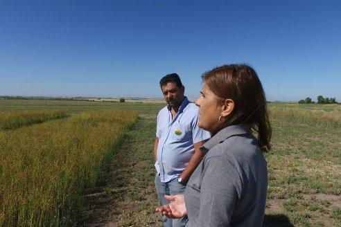 Lino: La semilla que supera todas las modas - Grupo de trabajo Genética, Mejoramiento y Biotecnología Vegetal de EEA INTA Paraná