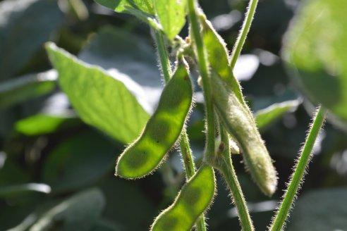 La última generación en herbicidas pre emergentes inteligentes.