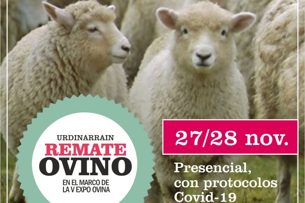 Adelantan características del remate ovino y la participación de cabañas