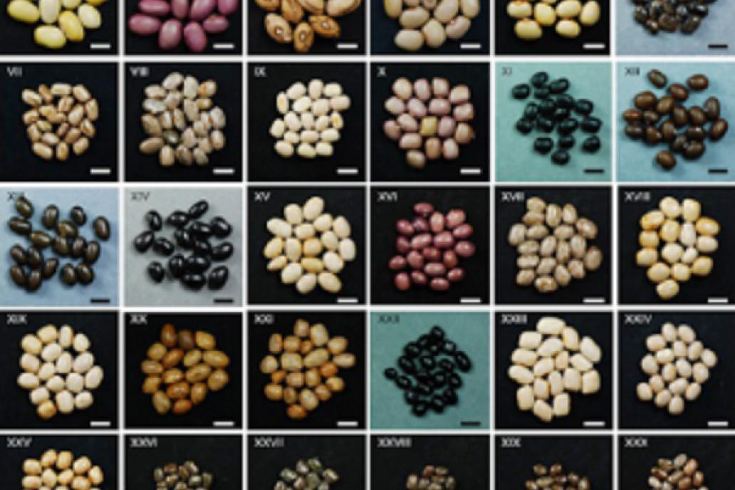 Las semillas argentinas tendrán su DNI genético