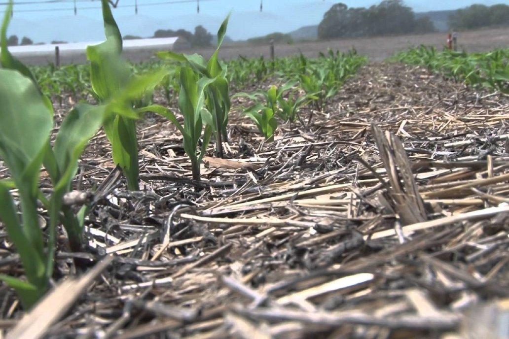 Prevén bonificar impuestos a los agricultores sustentables.