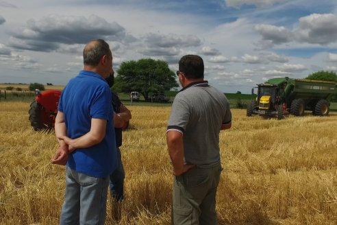Marcos y Edilio Bettoni - Productores Agropecuarios - Cosecha de Trigo en Sauce Pinto