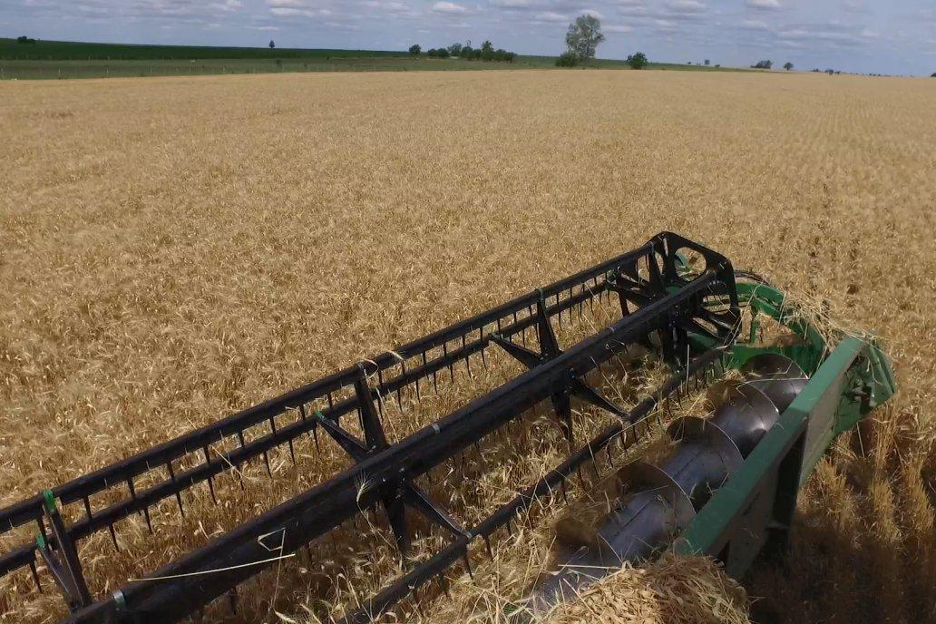 Las semillas implantadas en junio se cosecharon el 11 de noviembre.