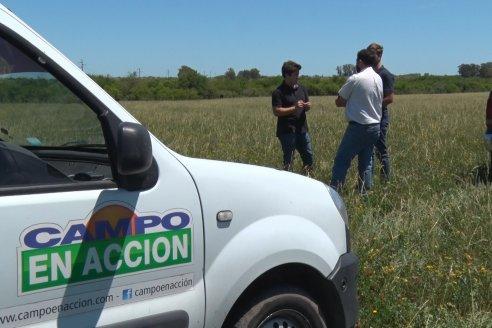 Tomás Ilarregui y Federico Paoloni - Productores Agropecuarios - Ganadería con valor agregado en San Salvador