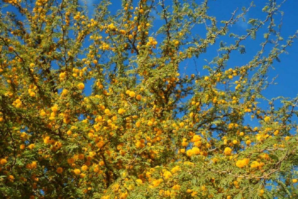 La misión del certamen fue divulgar la botánica local y lograron el objetivo.