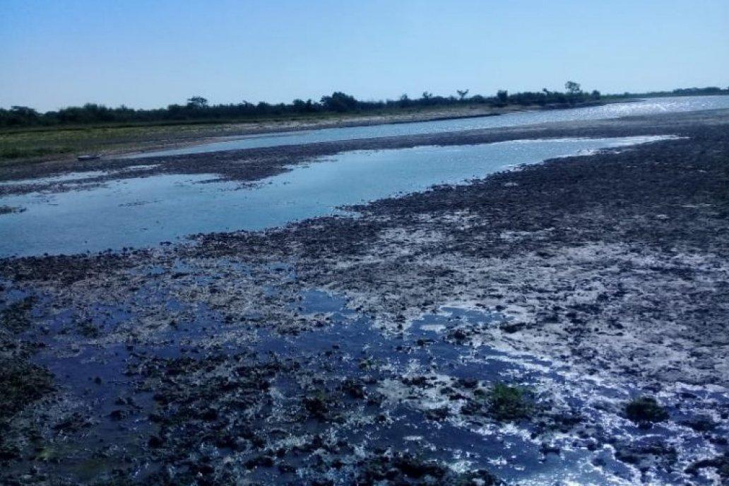 La investigación requerida es para determinar si arroceros ayudan a secar el río