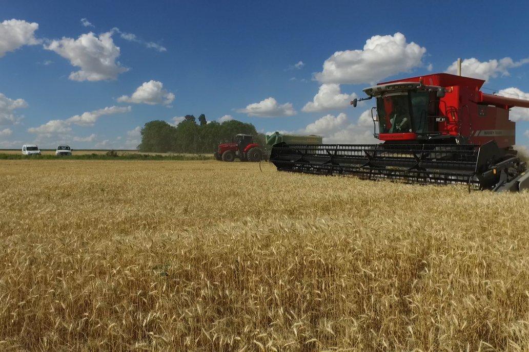 A cosecha se verá cuánto aumentó la producción de la campaña en ciernes.