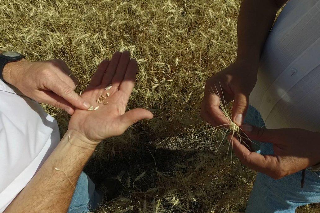 Para bajar la huella del carbono ponen en foco la fertilización nitrogenada.