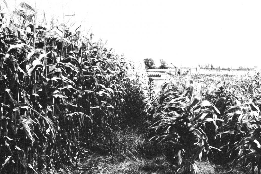 La foto que hizo historia, el primer lote sembrado en directa por Fagioli.