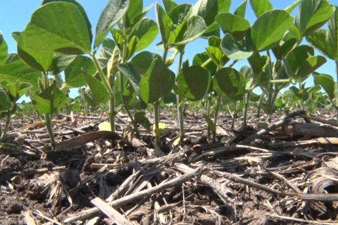 Alerta en Brasil por enfermedad desconocida que pudre los cultivos