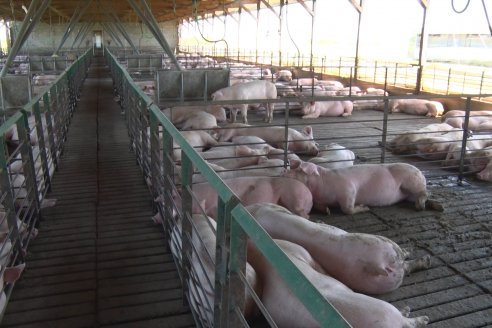 Ya rige la escala salarial para los trabajadores de la actividad porcina