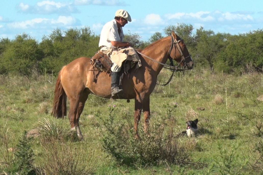 En La Colorada la ganadería es color Hereford