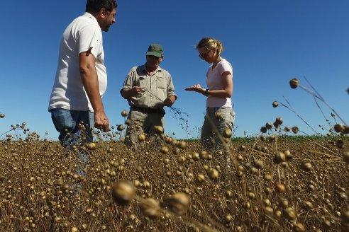 Lineros entrerrianos no cubren ni 10.000 hectáreas esta campaña