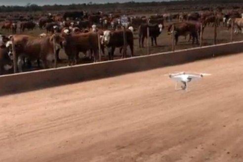 En los corrales ya usan drones como insumo de la ganadería intensiva