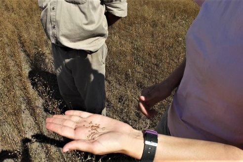 Silvana y Nestor Brondi - Productores Agropecuarios - Cosecha de Lino en Maria Grande