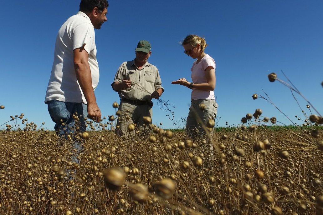 El estado general de los cultivos es bueno indican desde la Bolsa (foto archivo)