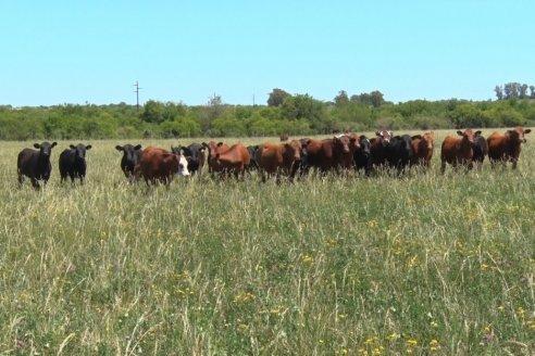 Nuevos desafíos para la ganadería en un 2021 en marcha