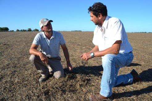 Victor Veik - El Porvenir Consultora Agropecuaria - Cultivos de Servicios y Siembra de Soja en Crucesita 8va.