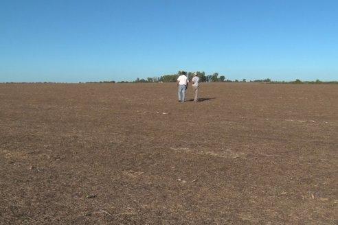 El costo de producir granos sube al ritmo de los fertilizantes