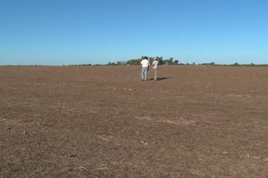 Quién hizo cultivo de servicio este invierno preserva el suelo y gasta más plata
