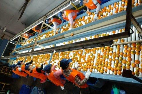 Gran Bretaña se abre a los exportadores de cítricos