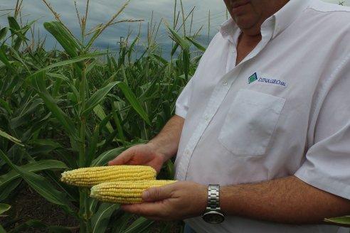 Agricultores ya sembraron más del 90% del área destinada a la soja y maíz de la cosecha modelo 2021