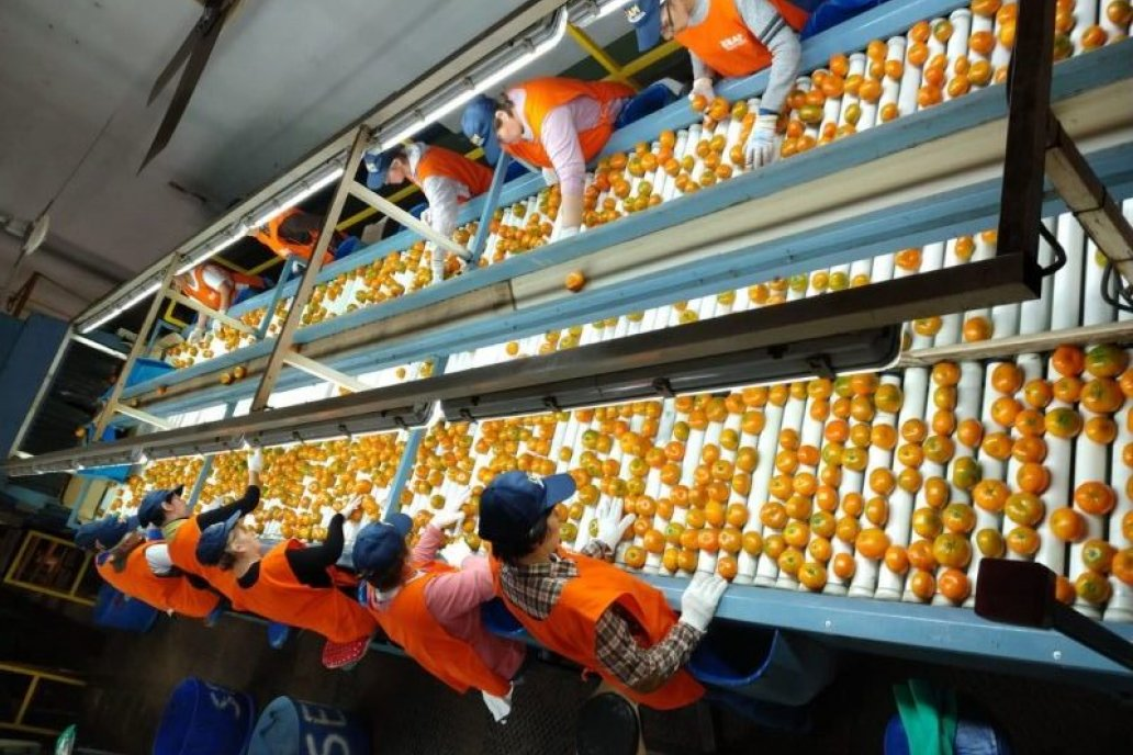 La medida alcanza a los productores de alimentos y bebidas de todo el país