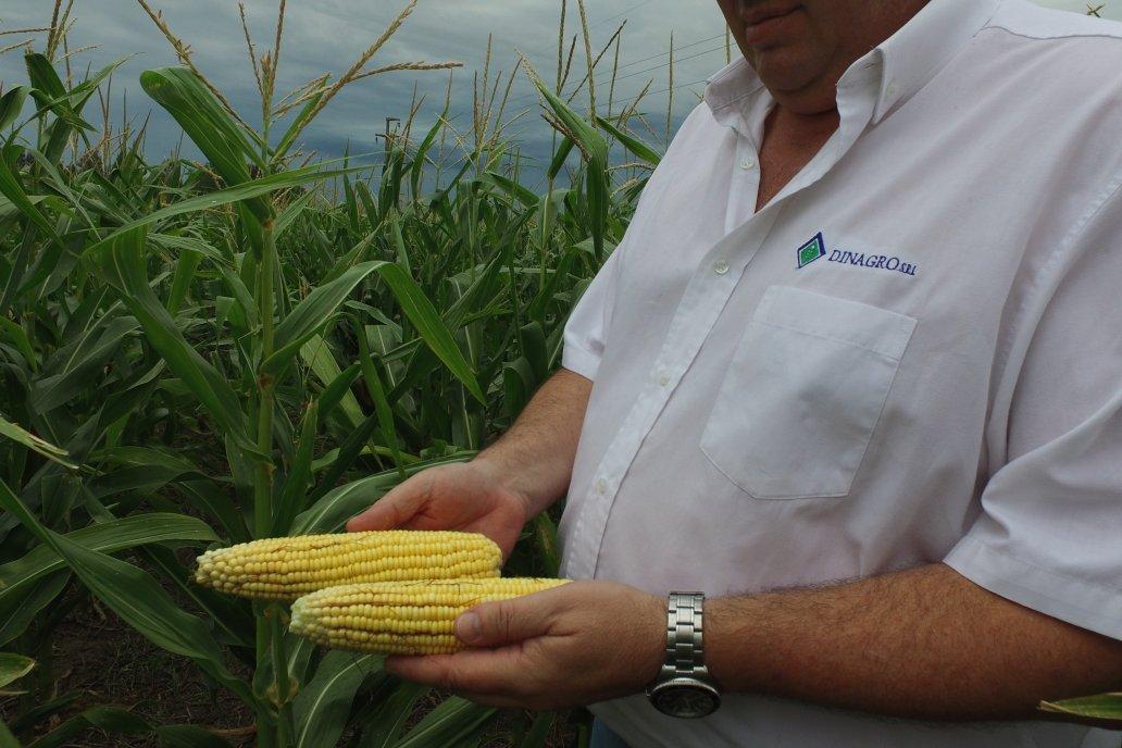 Para la Bolsa de Cereales, la condición de humedad actual es adecuada.