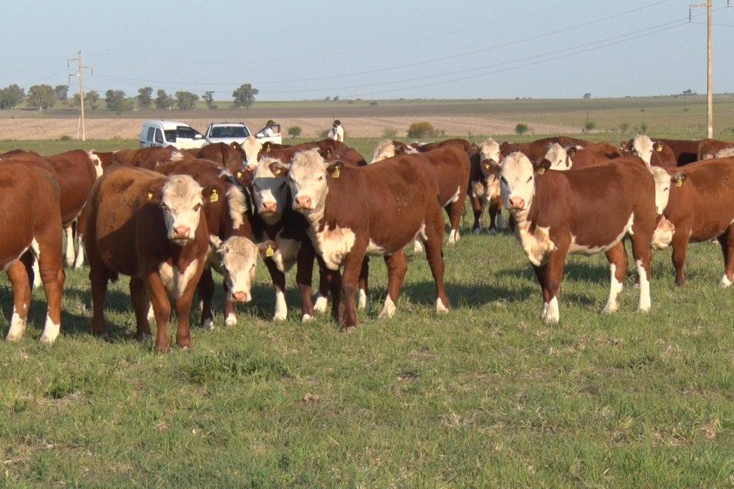 Una ganadería muy sólida: Se faenaron 14,2 millones de cabezas en 2020