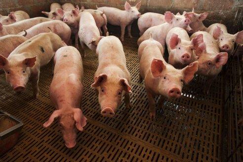 """Carne de cerdo: va por otro récord, pero con una """"piedra en el zapato"""""""