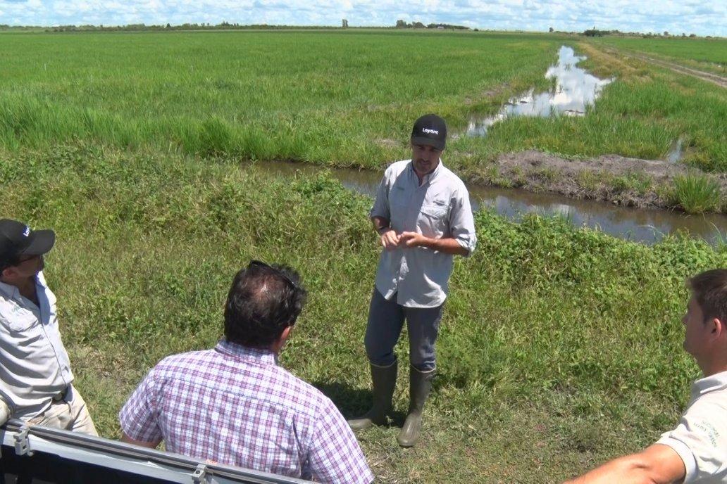 Expertos recorrieron ensayos ubicados en Lucas Sud, Departamento Villaguay.