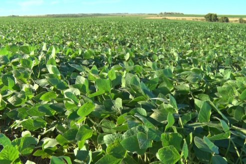 Walter Restano - Cereales Bolzan SRL - Los rindes esperados para los granos gruesos generan buen humor en Paraná Campaña