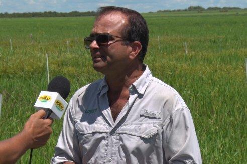 Recorrida Daser Agro - Corteva - Ensayo de Arroz en Lucas Sud - Hay una solución integral para controlar malezas