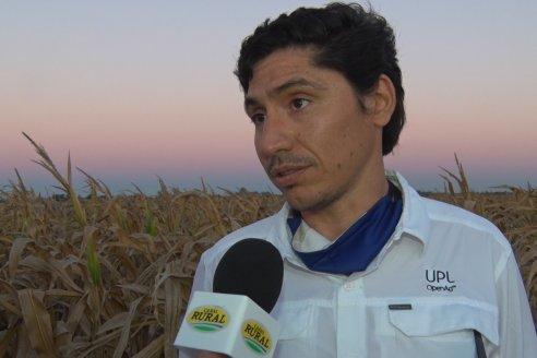 Jornada a Campo de Berardo Agropecuaria SRL - Potencial maicero y girasolero con tecnología y manejo - Urdinarrain