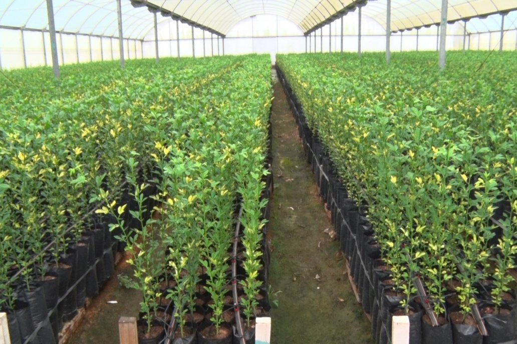 Vivero Santa Maria - La Criolla, Entre Ríos - Plantines de cítricos y nogales de primera calidad