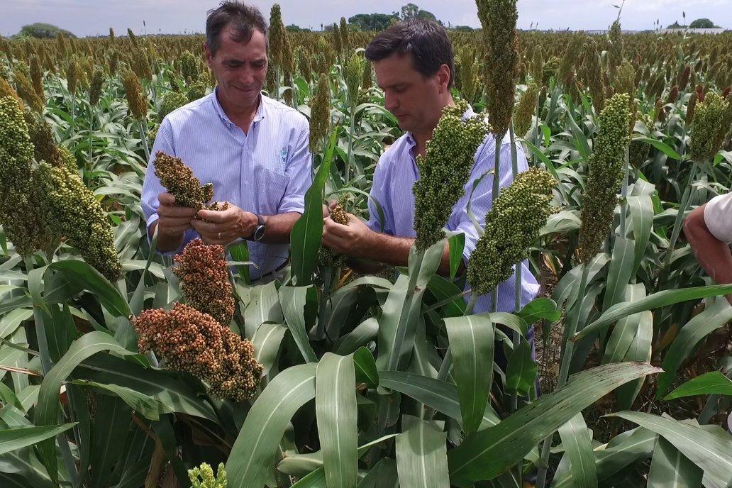 La intensa demanda internacional puso en valor al cultivo argentino.