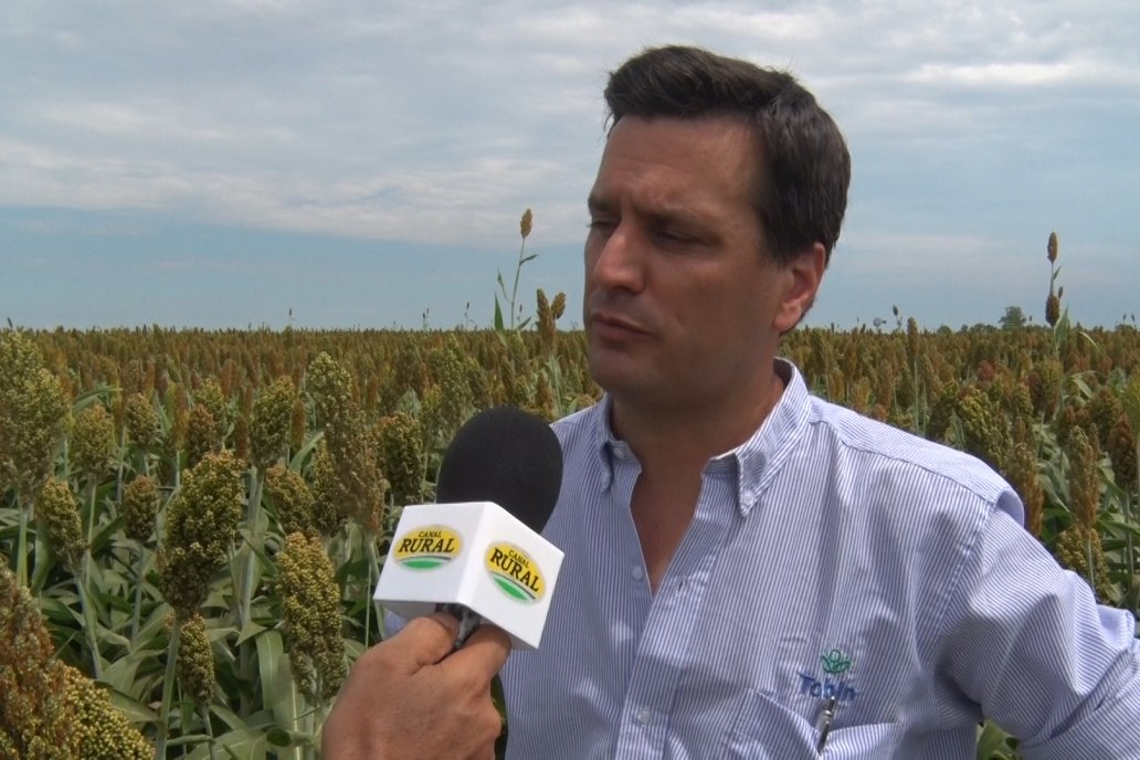 Bauzada contó que hay variedades adaptadas a los requerimientos de cada zona.