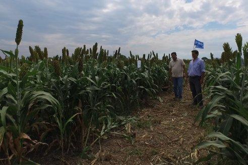 Eduardo Cicerone y Pablo Bouzada - Tobin Semillas - Más allá del pulgón, el sorgo no tiene techo en la Argentina