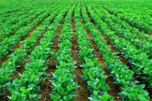 Europa paga créditos de soja certificada bajo el sello de Aapresid