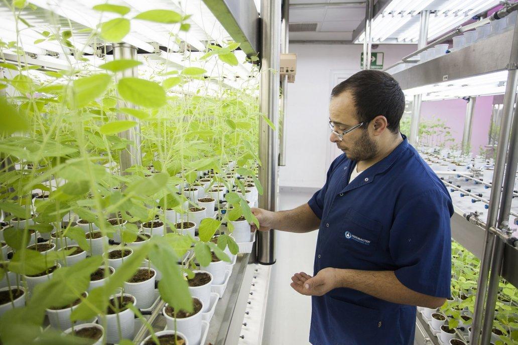 Rizobacter logra que el 23 % de la soja mundial se trate con sus tecnología.