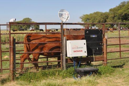 Se viene una balanza inteligente para hacer ganadería de precisión