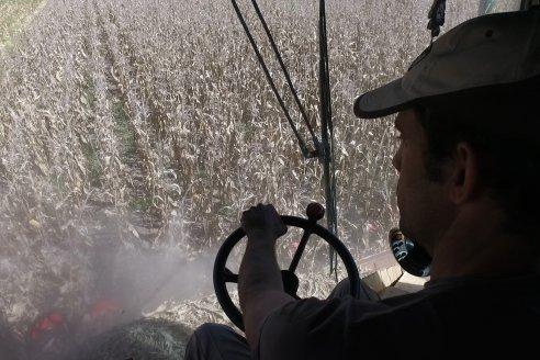El maíz entrerriano de primera rindió 5.138 kilos por hectárea