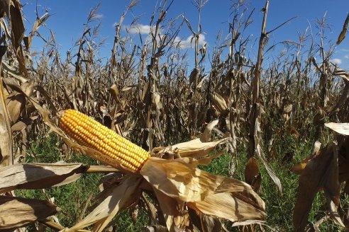 La baja internacional de los granos también impactó en el país